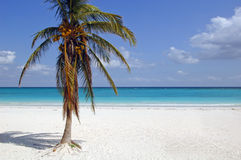 White sand beach with coconut palm Royalty Free Stock Photography