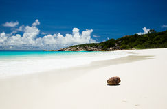 White sand beach with coconut in Seychelles Stock Images