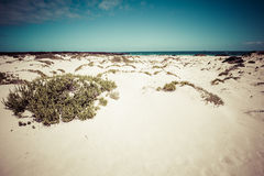 White sand beach in the evening, Lanzarote, Canary islands, Spai Royalty Free Stock Photography