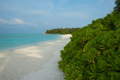 White sand on the beach, Green trees and blue ocean. Maldives Stock Photo