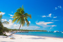 White sand beach with palm, Dominican Republic Stock Photo
