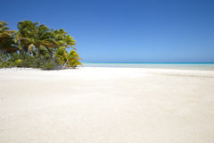 White sand beach and palm tree on blue lagoon Royalty Free Stock Photo