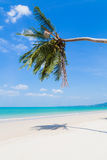 White sand beach and palm tree Stock Photo