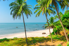 White sand beach and palm trees. On a deserted island Stock Images