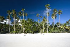 White sand beach with palms. And blue sky Royalty Free Stock Photos