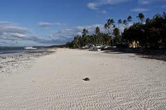 White Sand Beach Panglao, Philippines. Banca Boat on remote white sand beach of Panglao, Philippines Royalty Free Stock Photos