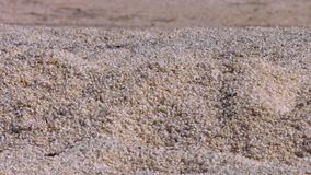 White sand beach and shells stock video footage