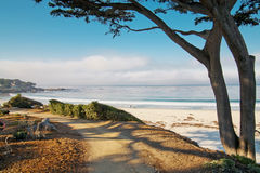 White sand beach and trail with tree in Carmel, CA Royalty Free Stock Photography