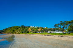 White Sand Beach on Waiheke Island, New Zealand with a beautiful blue sky in a sunny day with some houses behind Stock Images