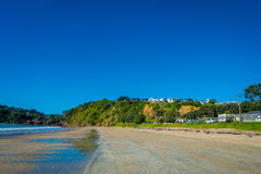 White Sand Beach on Waiheke Island, New Zealand with a beautiful blue sky in a sunny day with some houses behind Stock Photo
