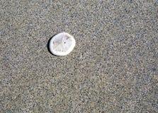 A white sand dollar on the beach Stock Photography