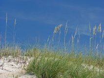 White sand dune and blue sky. Scenic view of sand dune with sea oats and blue sky background Royalty Free Stock Image