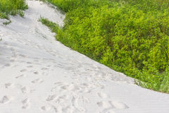 White sand dunes with green vegetation. Stock Image
