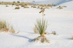 White Sand Dunes National Park Stock Photography