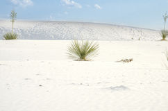 White Sand Dunes National Park Royalty Free Stock Photography