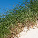 White sand dunes, tall grass and blue sky Royalty Free Stock Photos