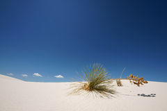 White Sand NP. Plant on a sand dune in white sands national monument New Mexico stock photography