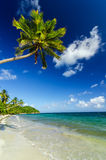 White Sand and Palm Tree Stock Photo