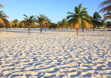 White sand and palm trees. Stock Photo