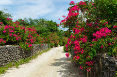 White sand street in Taketomi Island, Okinawa, Japan. Taketomi Island, located on south of Okinawa Japan, is known as scenic reserved island of traditional Royalty Free Stock Photography