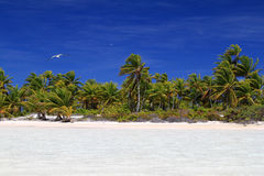 Wild Coco Palm Beach Royalty Free Stock Images