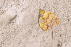 White sand and yellow dry leaf on the beach at noon for vacation to relax background. Vintage tone. Thai beach. With copy space Stock Image