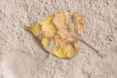 White sand and yellow dry leaf on the beach at noon for vacation to relax background. Vintage tone. Thai beach. With copy space Royalty Free Stock Photography