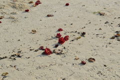 White sanded beach with flowers Royalty Free Stock Photos