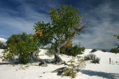 White Sands 1 Royalty Free Stock Photography