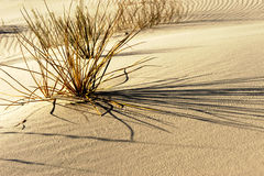 White sands Royalty Free Stock Photography