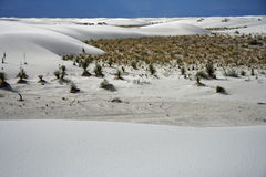 White Sands. Plant life in White Sands National Monument, New Mexico Royalty Free Stock Image