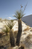 White Sands Stock Photography