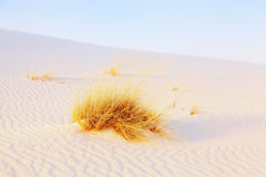 White Sands Royalty Free Stock Photo
