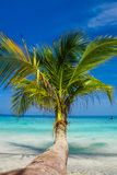 White sands beach and palm Stock Photography