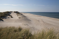 White Sands, Denmark. Looking along the beach away from the town of White Sands (Hvide Sande) in Denmark the beach of white sands seems endless. Sand dunes Stock Photos