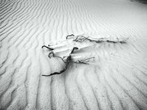 White Sands - Desert in Black & White Royalty Free Stock Photo