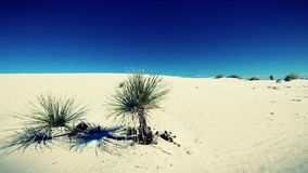 White sands desert, Stock Photography