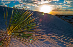 White Sands Dunes New Mexico Sunset Solar Flare Cactus Royalty Free Stock Image
