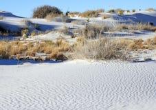 White Sands National Monument. Scrub brush grows is the flats in the White Sands National Monument Stock Photos