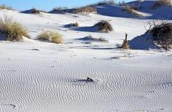 White Sands National Monument. Scrub brush grows is the flats in the White Sands National Monument Royalty Free Stock Image