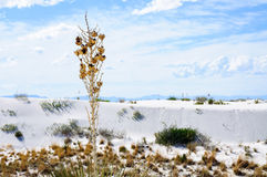 White Sands National Monument Stock Photo