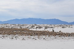White Sands National Monument, New Mexico Royalty Free Stock Images
