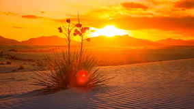 White Sands National Monument Sunset, New Mexico - Timelapse Royalty Free Stock Photos