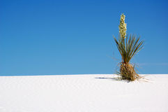 White Sands National Park. Landscape of White Sands National Park royalty free stock photos