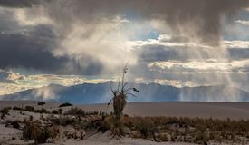 White sands national park with rain storm and clouds royalty free stock image