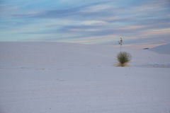 White Sands New Mexico. A dune in White Sands New Mexico at sunset Royalty Free Stock Images