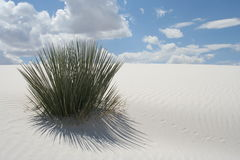 White Sands New Mexico Stock Photo