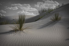 White Sands New Mexico Stock Images