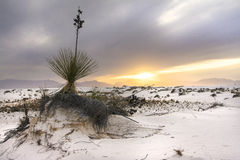 White Sands Sunset Royalty Free Stock Images
