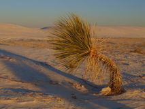 White Sands Sunset Royalty Free Stock Photography